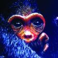 Geboorte aap