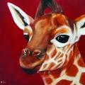 Geboorte giraffe